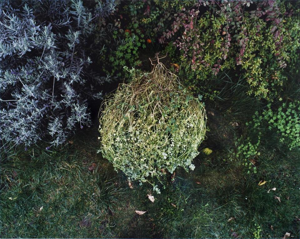 "David Wolf's ""Clover Tangle"" from the series ""Nurturing Time, Life in a Backyard Garden."""
